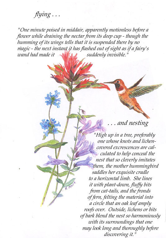 humming bird quotes quotesgram